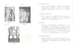 桐説明文4